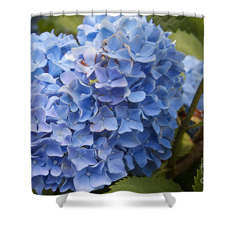 Flower Shower Curtain featuring the photograph Blue Flower by William Norton