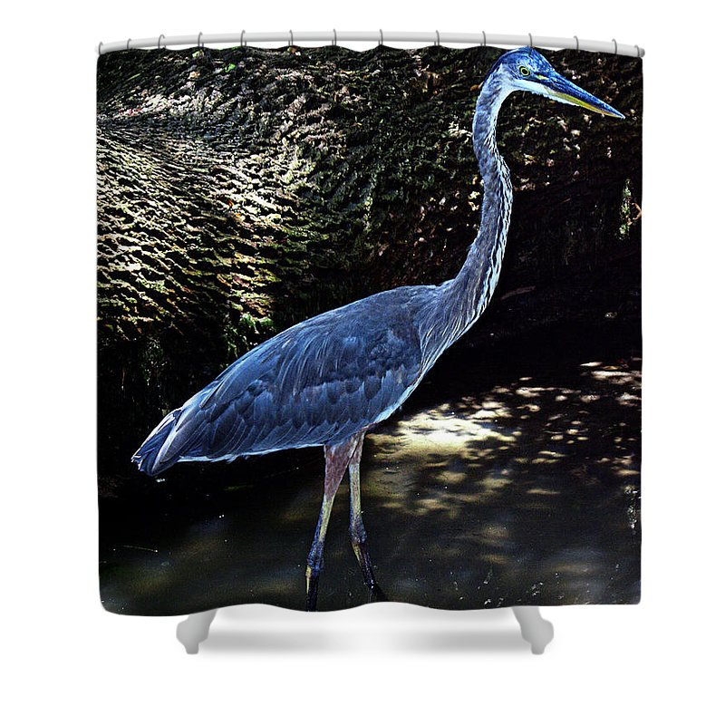 Nature Shower Curtain featuring the photograph Blue Heron 8 by Earl Johnson