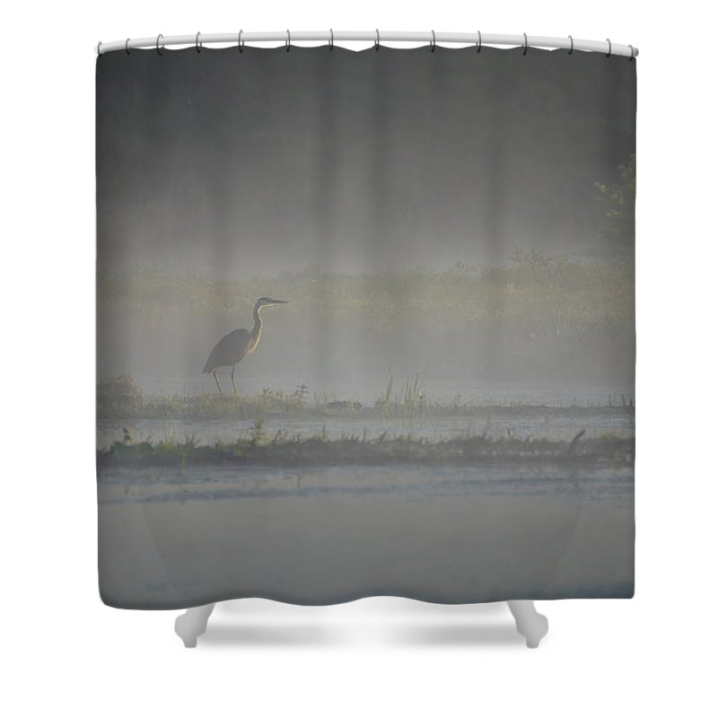 Bird Shower Curtain featuring the photograph Blue Heron At Dawn by Donna Doherty