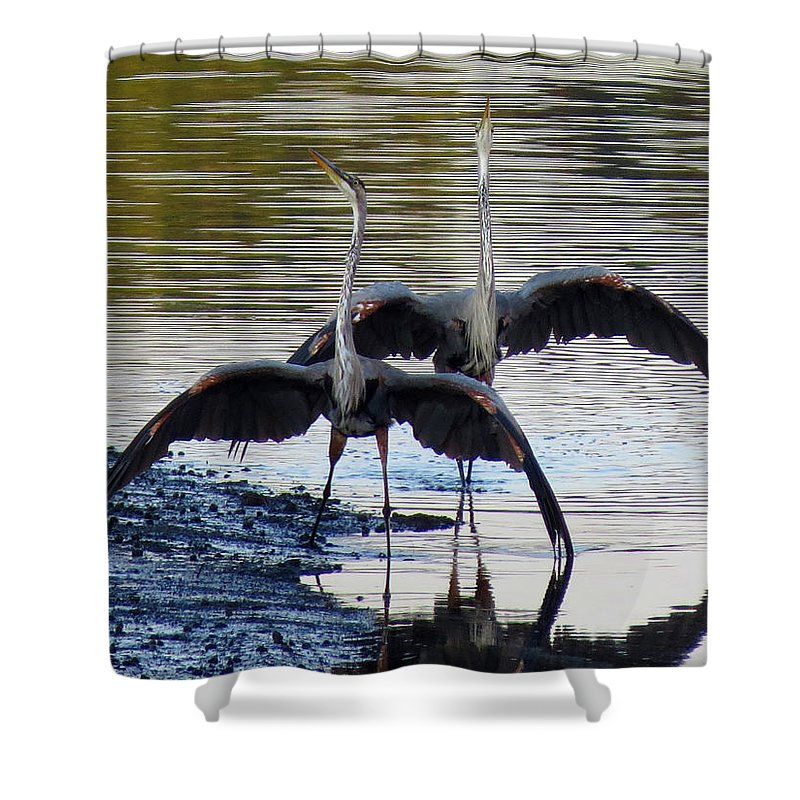 Blue Heron Shower Curtain featuring the photograph Great Blue Heron Ballet by Dianne Cowen