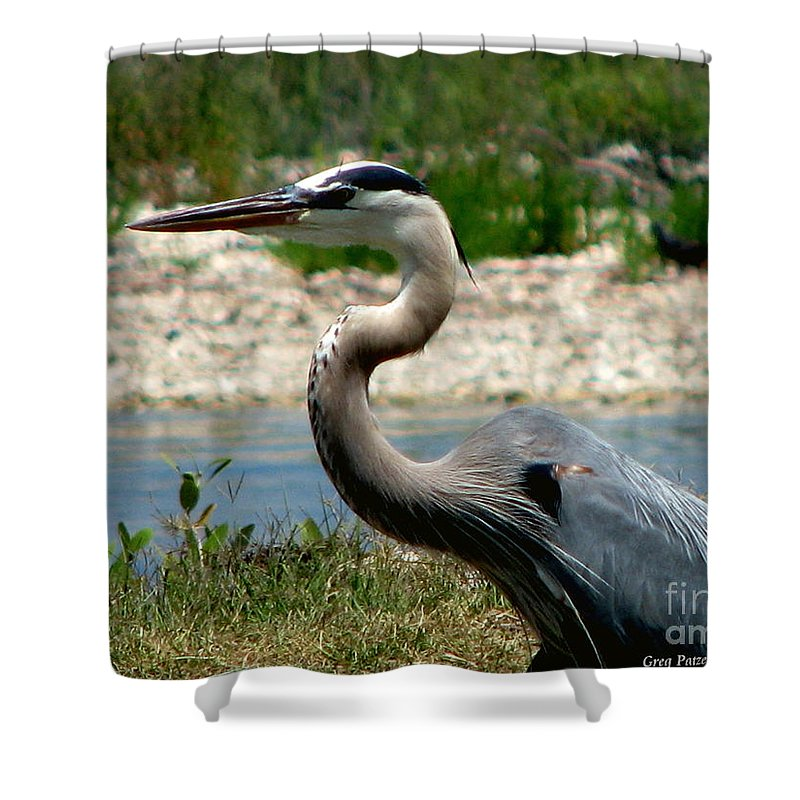 Art For The Wall...patzer Photography Shower Curtain featuring the photograph Blue Heron by Greg Patzer