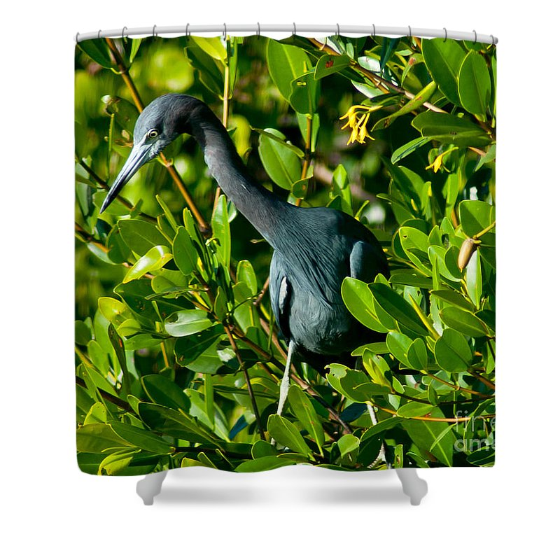 Tarpon Springs Shower Curtain featuring the photograph Blue Heron In Mangroves by Stephen Whalen