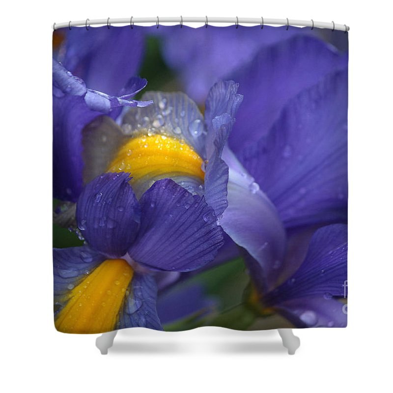 Blue Flowers Shower Curtain featuring the photograph Blue Iris Close Up by Luv Photography