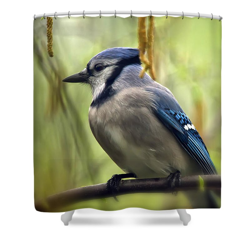 Bird Shower Curtain featuring the photograph Blue Jay On A Misty Spring Day by Lois Bryan