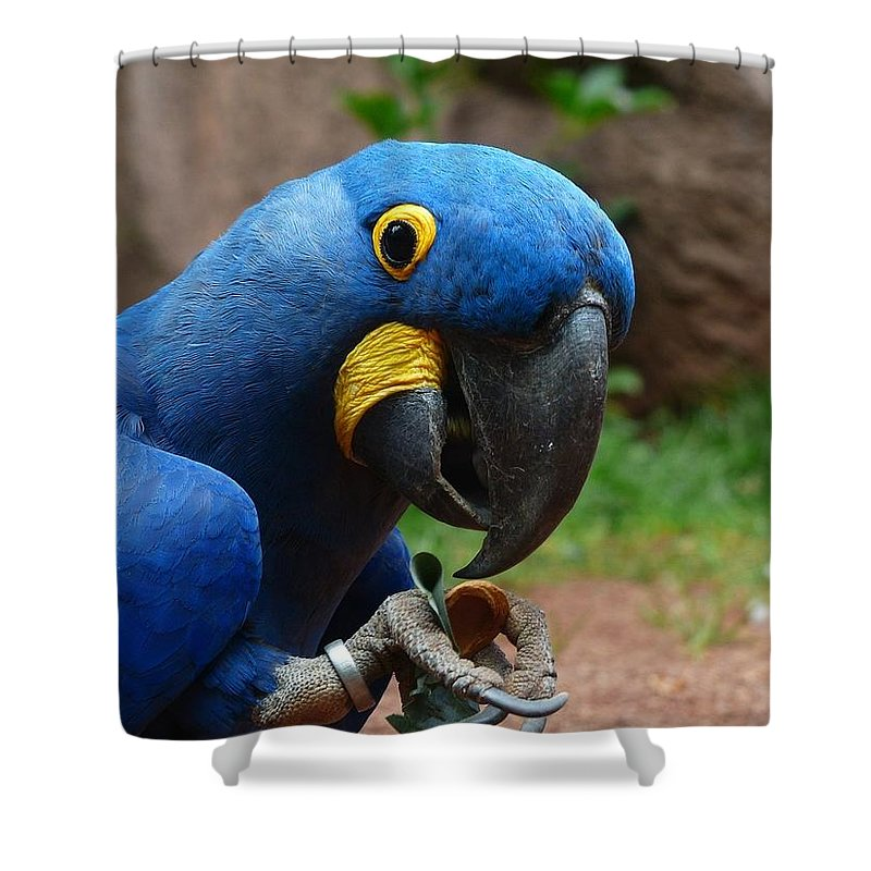 Parrot Shower Curtain featuring the photograph Parrot by FL collection