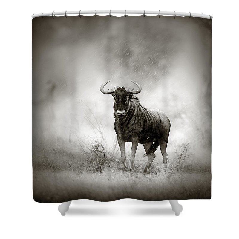 Blue Shower Curtain featuring the photograph Blue Wildebeest In Rainstorm by Johan Swanepoel