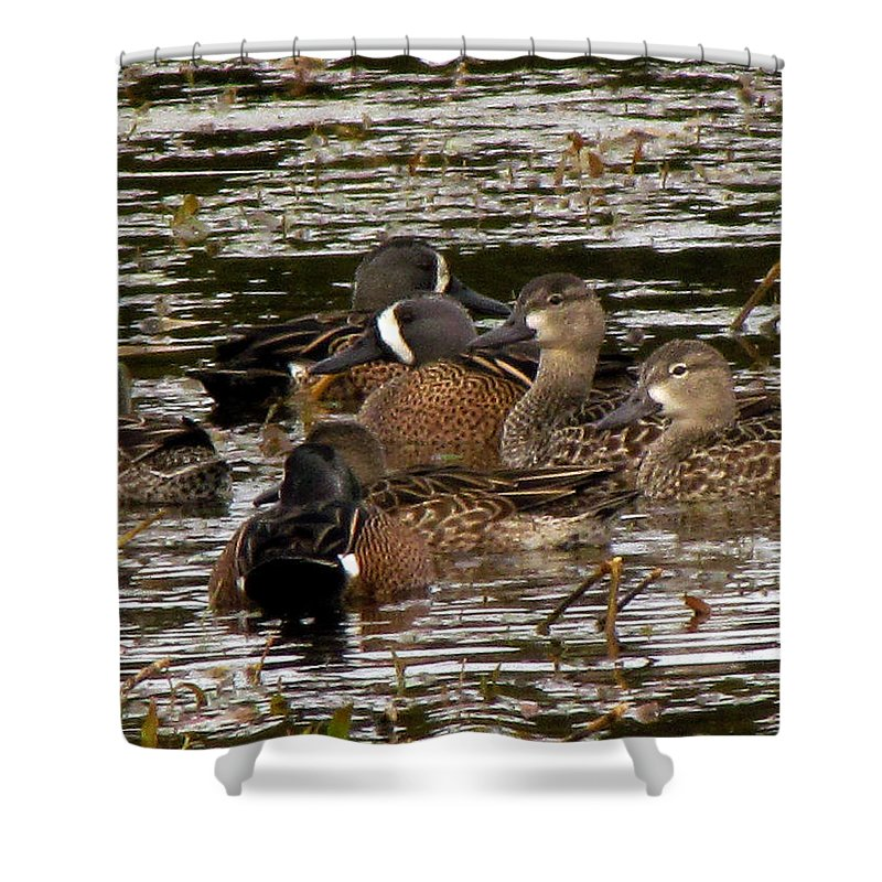 Animals Shower Curtain featuring the photograph Blue Winged Teals by J M Farris Photography