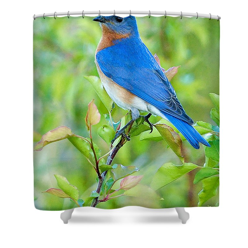 Happiness Shower Curtains