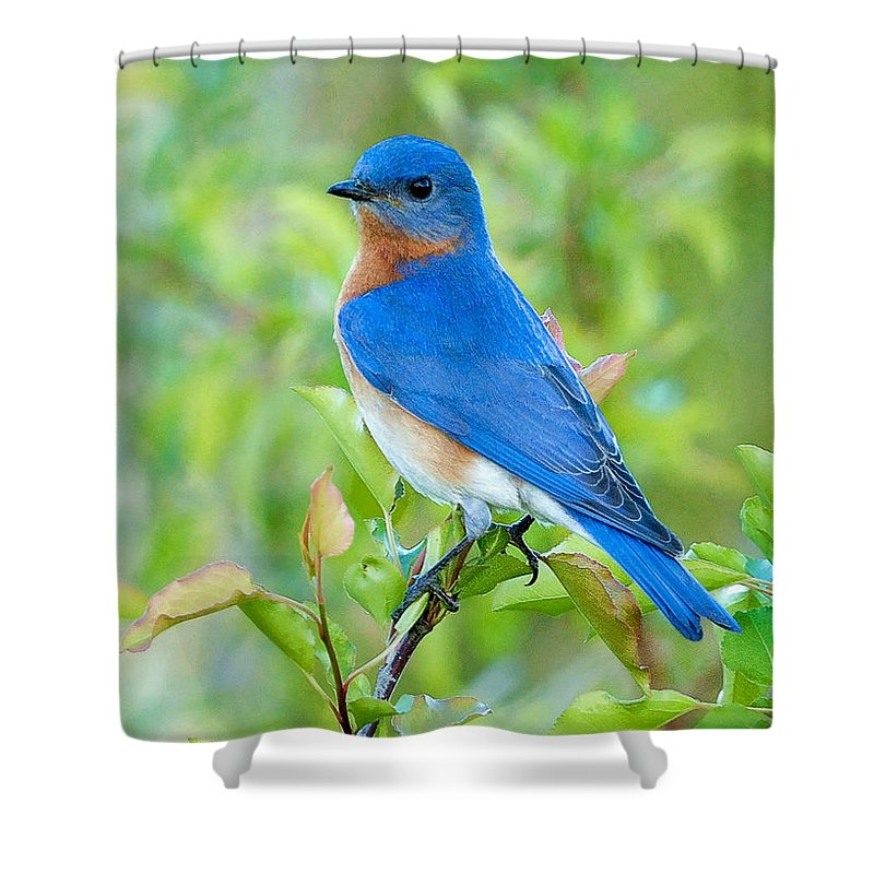 Song Birds Shower Curtains