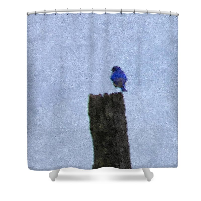 Blue Shower Curtain featuring the photograph Bluebird On A Fencepost by Nick Kirby