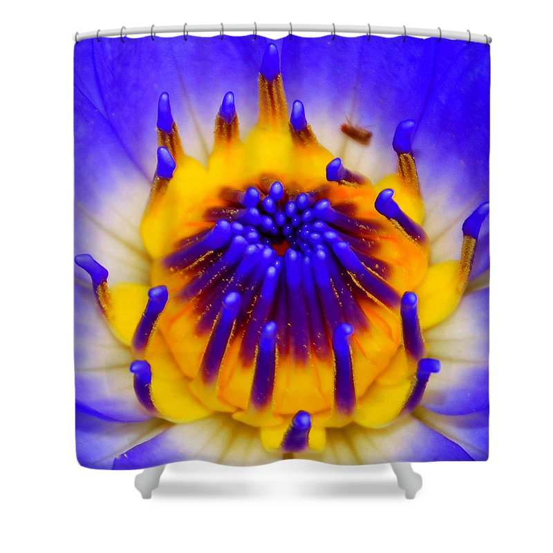 Blue Shower Curtain featuring the photograph Blue Brilliance by David Lee Thompson