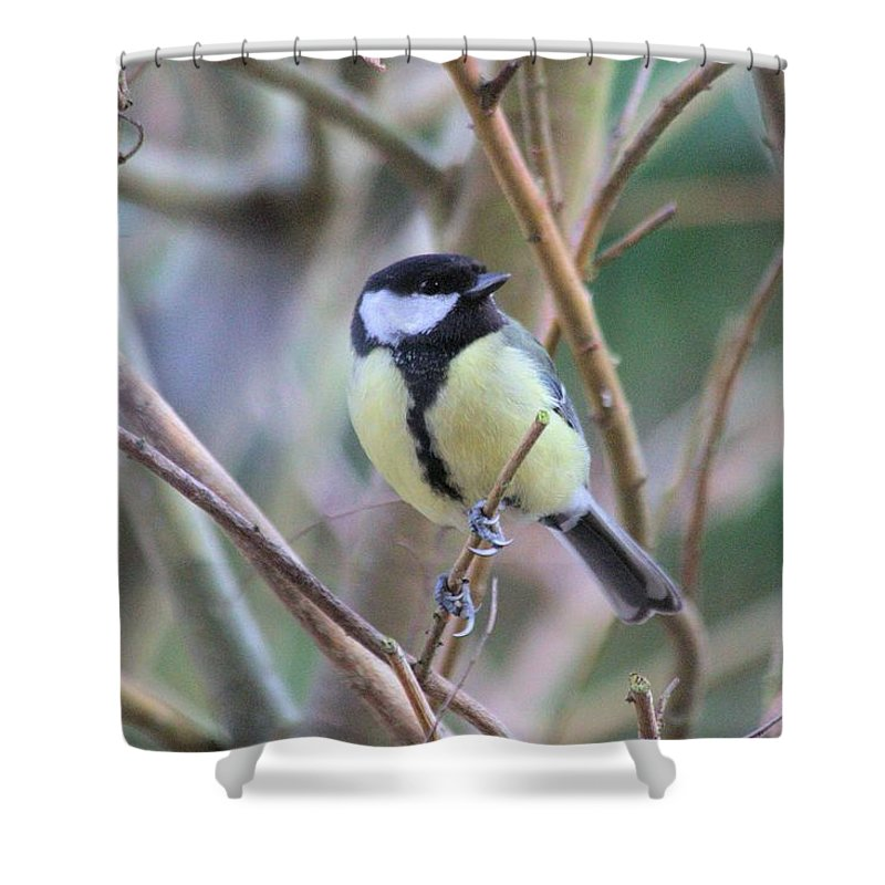 Bluetit Shower Curtain featuring the photograph Bluetit by Gordon Auld