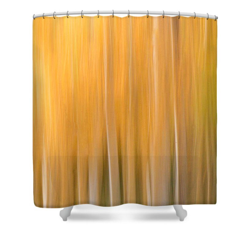 Aspen Shower Curtain featuring the photograph Blurred Aspens by CJ Middendorf