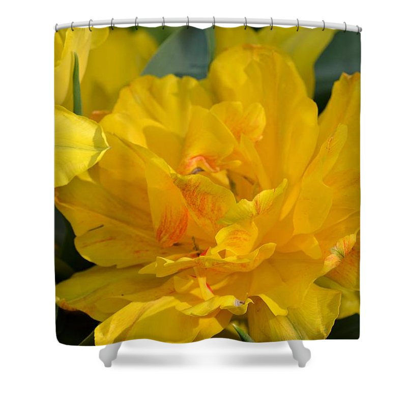 Blushing Yellow Shower Curtain featuring the photograph Blushing Yellow by Maria Urso