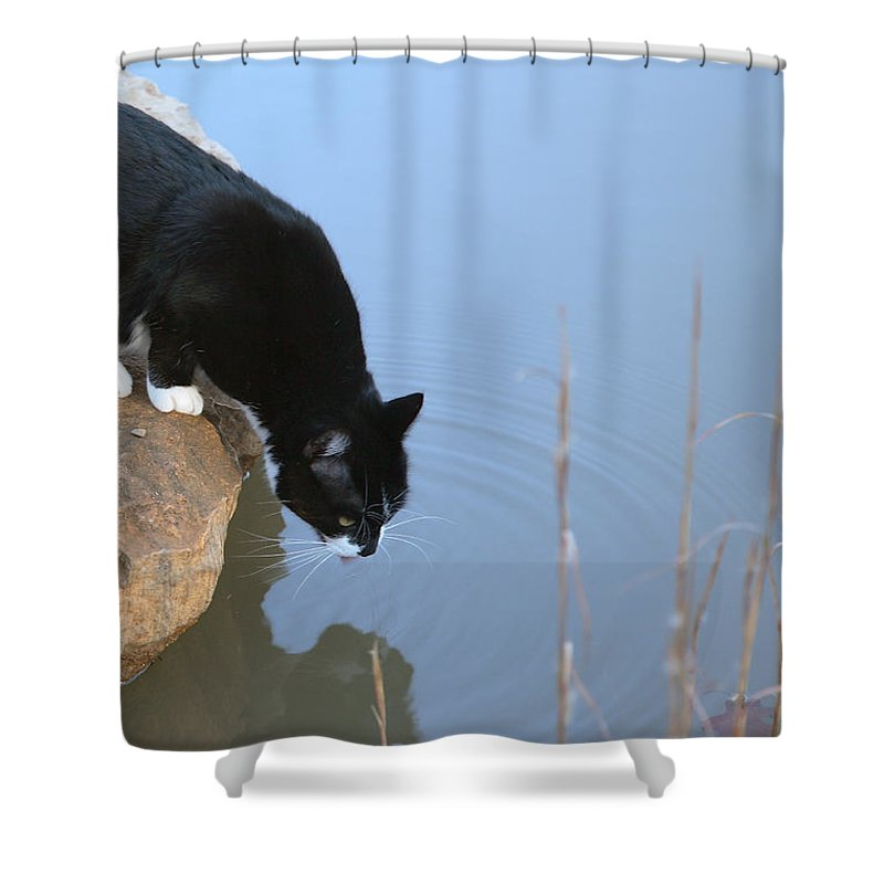 Cat Shower Curtain featuring the photograph Boat Drinking From Pond by Michael Dougherty