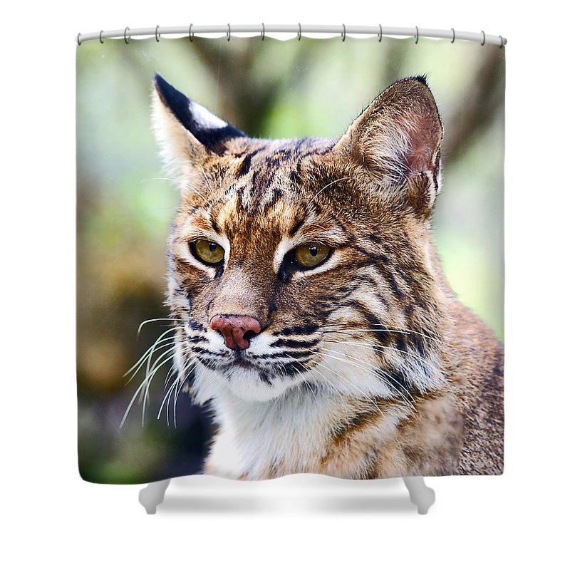 Bob Cat Shower Curtain featuring the photograph Bob Cat Pose by Davids Digits