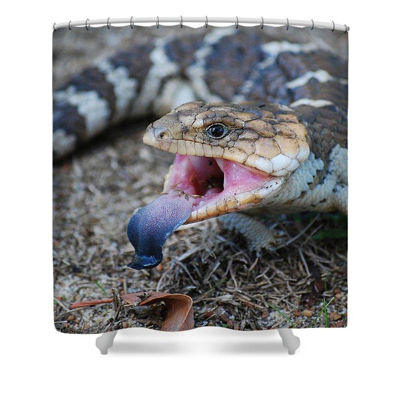 Bobtail Shower Curtain featuring the photograph Bobtail Lizard by Michelle Wrighton