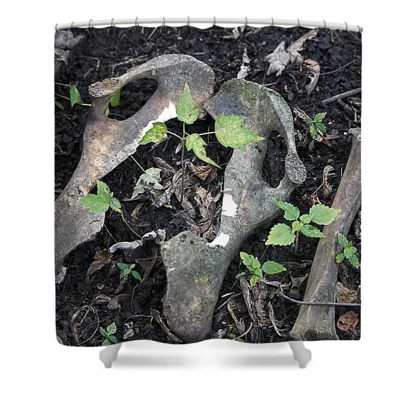 Michigan Shower Curtain featuring the photograph Bones On The Forest Floor by Thomas Woolworth