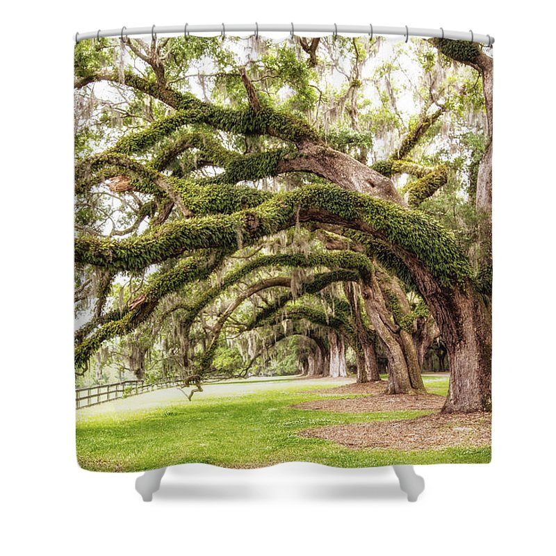 Trees Shower Curtain featuring the photograph Boones Oaks by Karol Livote
