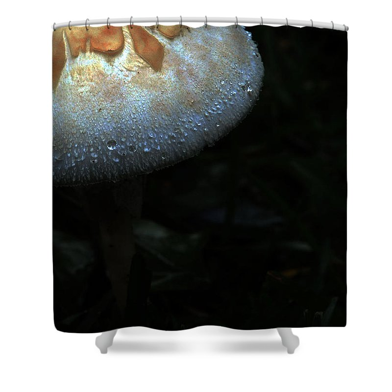 Mushroom Shower Curtain featuring the photograph Born of Isaac by Leon Hollins III