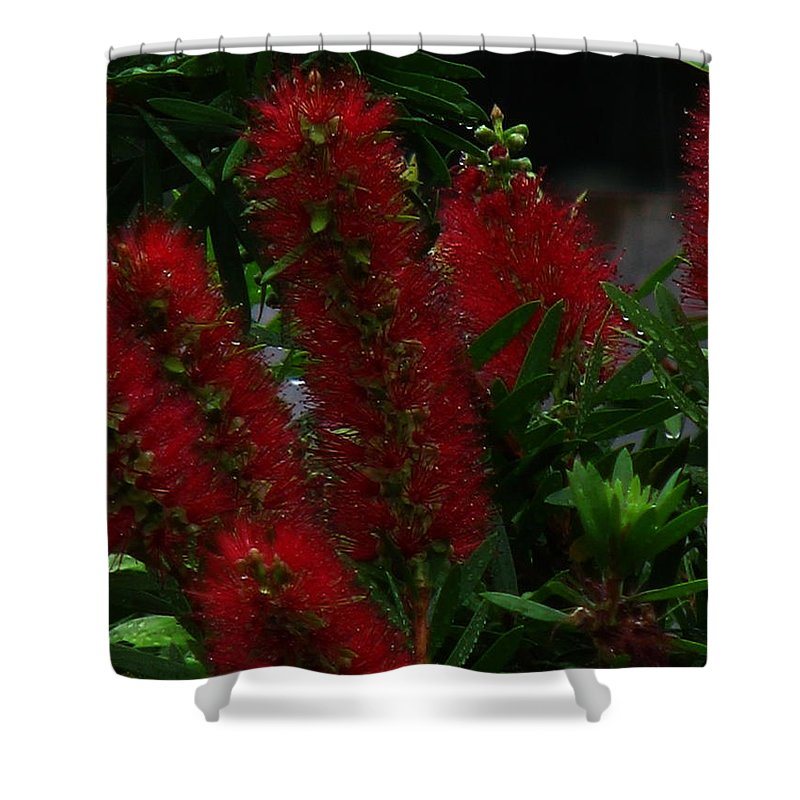 Patzer Shower Curtain featuring the photograph Bottle Brush by Greg Patzer