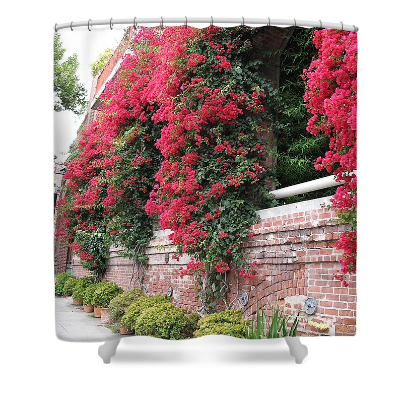 San Francisco Shower Curtain featuring the photograph Bougainvillea Wall In San Francisco by Christiane Schulze Art And Photography