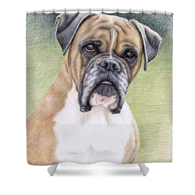 Dog Shower Curtain featuring the drawing Boxer Portrait by Nicole Zeug