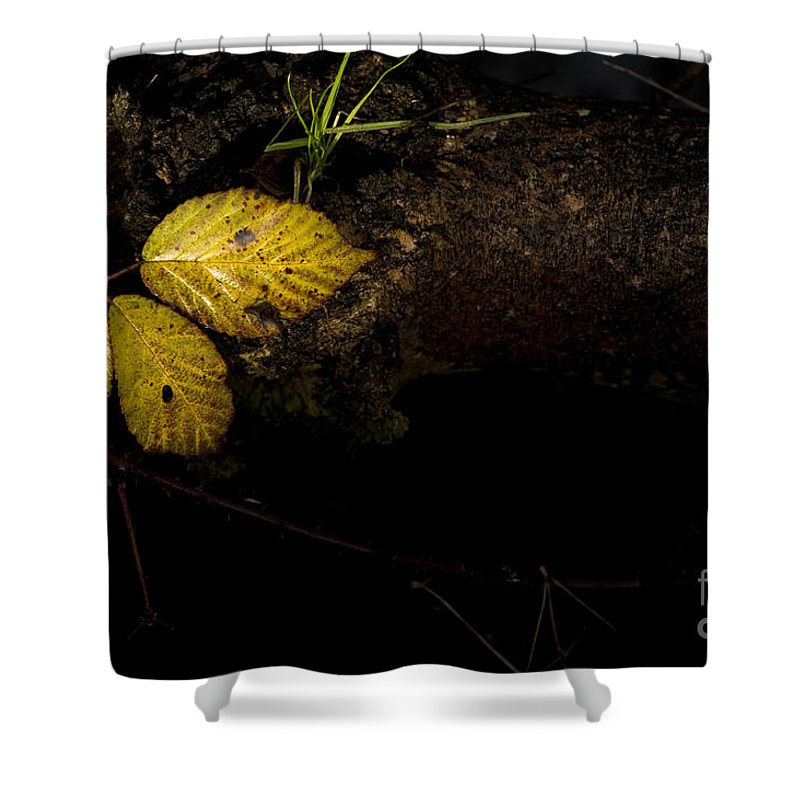 Natural Shower Curtain featuring the photograph Bramble Tree by Anne Gilbert