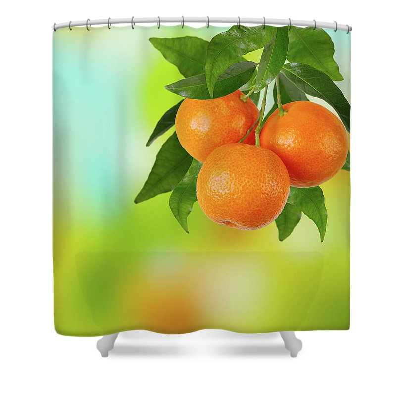 Hanging Shower Curtain featuring the photograph Branch Of Tangerines by Sashahaltam