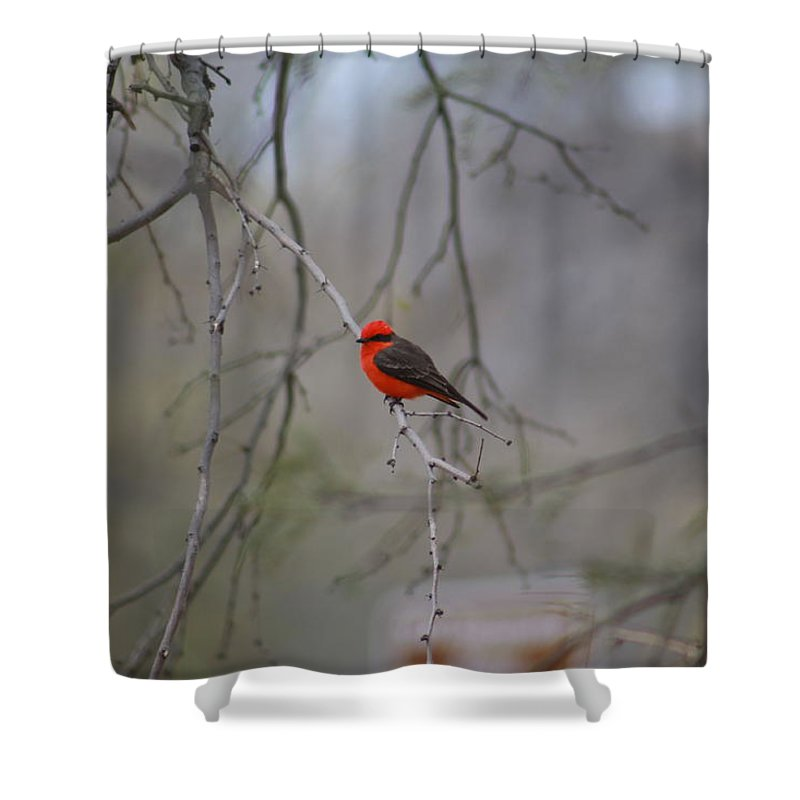 Shower Curtain featuring the photograph Brazilian Flycatcher #2 by G Berry