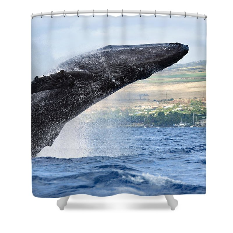Above Shower Curtain featuring the photograph Breaching Humpback Whale by M Swiet Productions