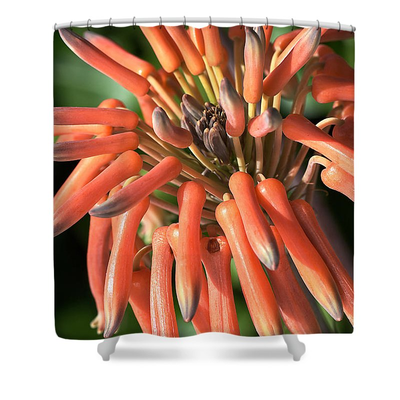 Cactus Shower Curtain featuring the photograph Breaking Out by Joy Watson