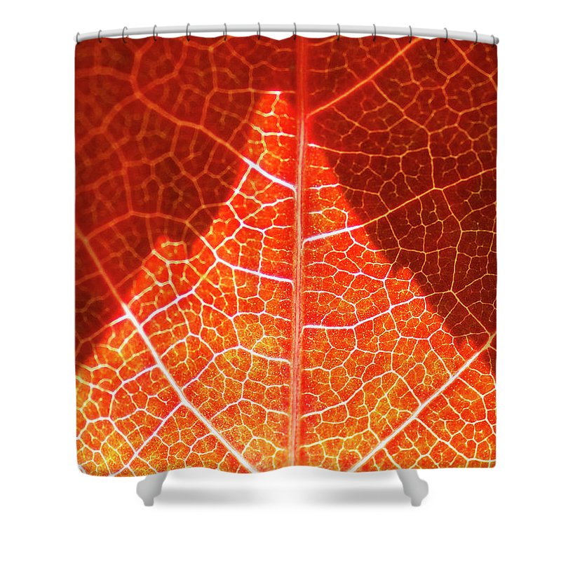 Red Shower Curtain featuring the photograph Bright And Dark by Heiko Koehrer-Wagner