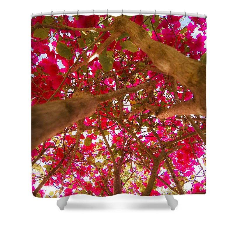 Antigua And Barbuda Shower Curtain featuring the photograph Bright Bougainvillea by Ferry Zievinger