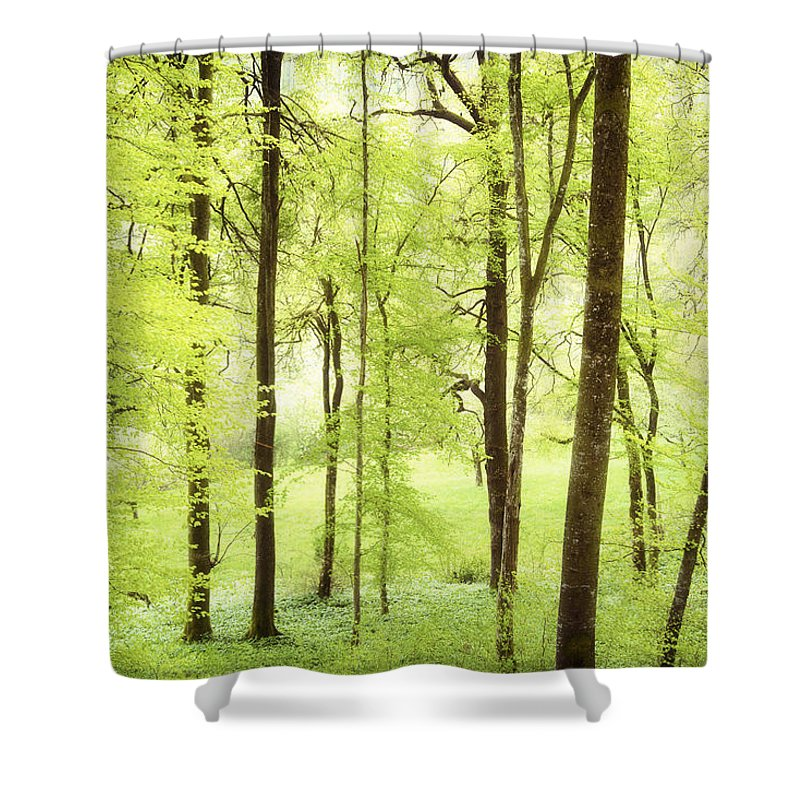 Green Shower Curtain featuring the photograph Bright Green Forest In Spring With Beautiful Soft Light by Matthias Hauser