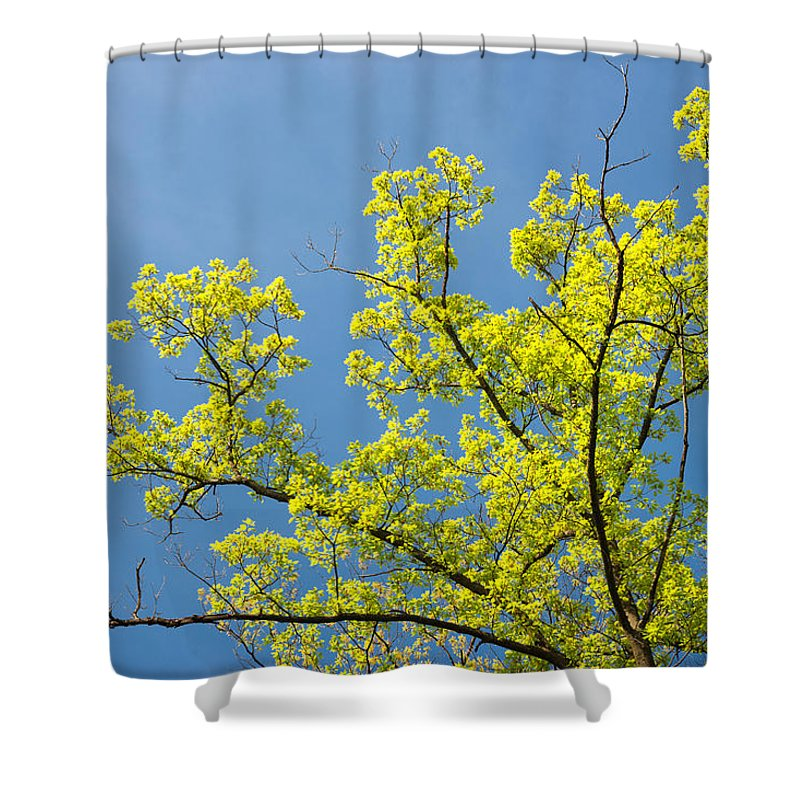 Tree Shower Curtain Featuring The Photograph Bright Green And Blue Sky
