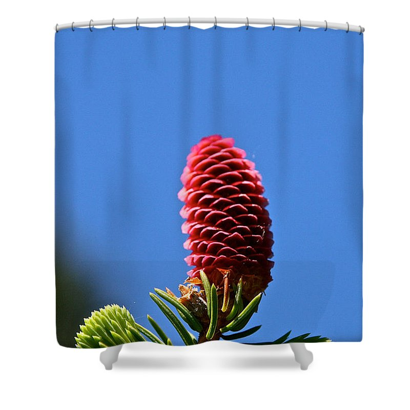 Tree Shower Curtain featuring the photograph Bright Horizions by Susan Herber