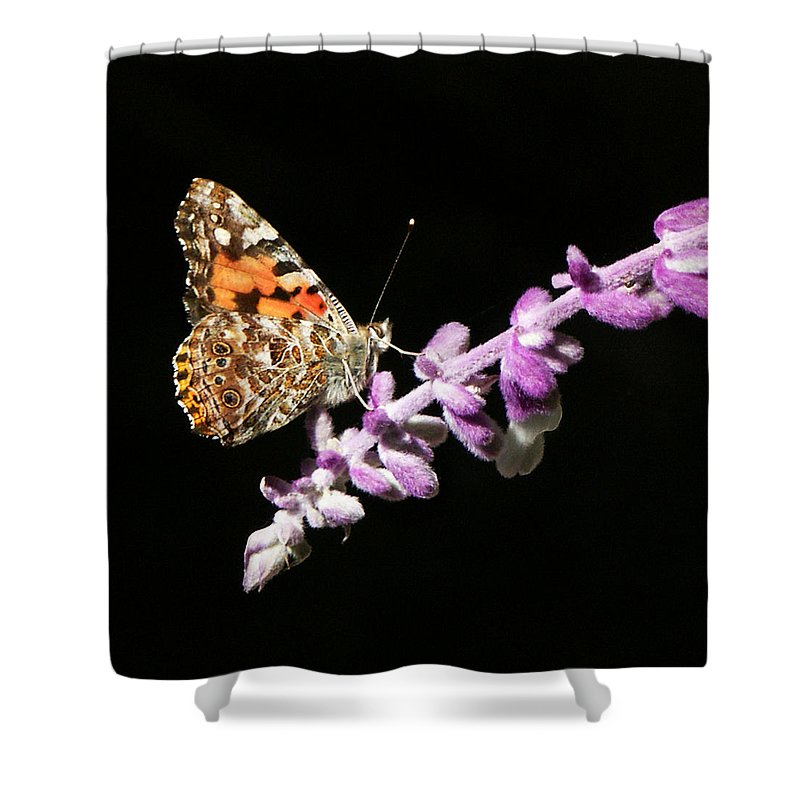 Painted Lady Shower Curtain featuring the photograph Painted Lady Butterfly On Purple Flower by Marilyn Hunt