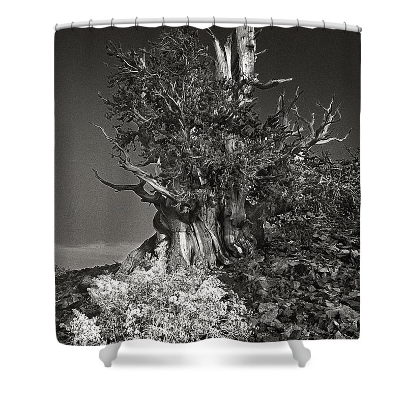 North America Shower Curtain featuring the photograph Bristlecone And Wildflowers In Black And White by Dave Welling