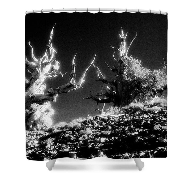 Infrared Shower Curtain featuring the photograph Bristlecone Twins In Infrared by Paul W Faust - Impressions of Light