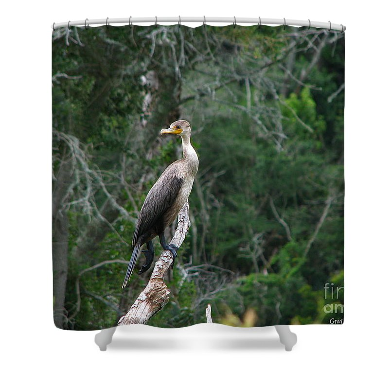 Patzer Shower Curtain featuring the photograph Bristol Cormorant by Greg Patzer