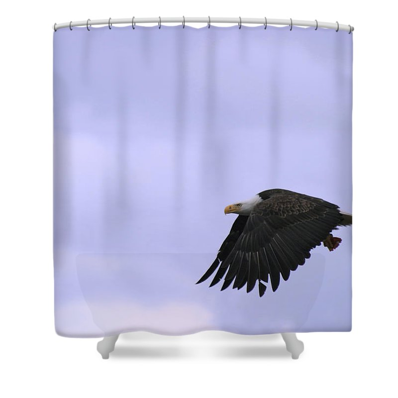 American Bald Eagle With Salmon Flesh Shower Curtain featuring the photograph Broken Feather Eagle by Kym Backland