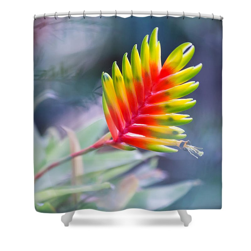 Tropical Shower Curtain featuring the photograph Bromeliad Symphony by Eti Reid