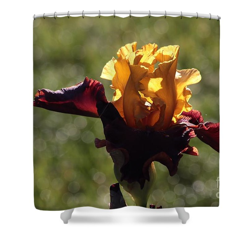 Iris Shower Curtain featuring the photograph Brown And Yellow Iris by Kenny Glotfelty