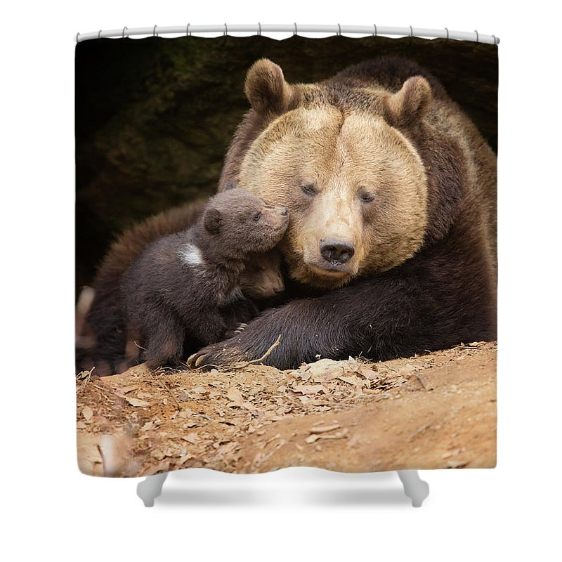 Brown Bear Shower Curtain featuring the photograph Brown Bear Family by Dietermeyrl