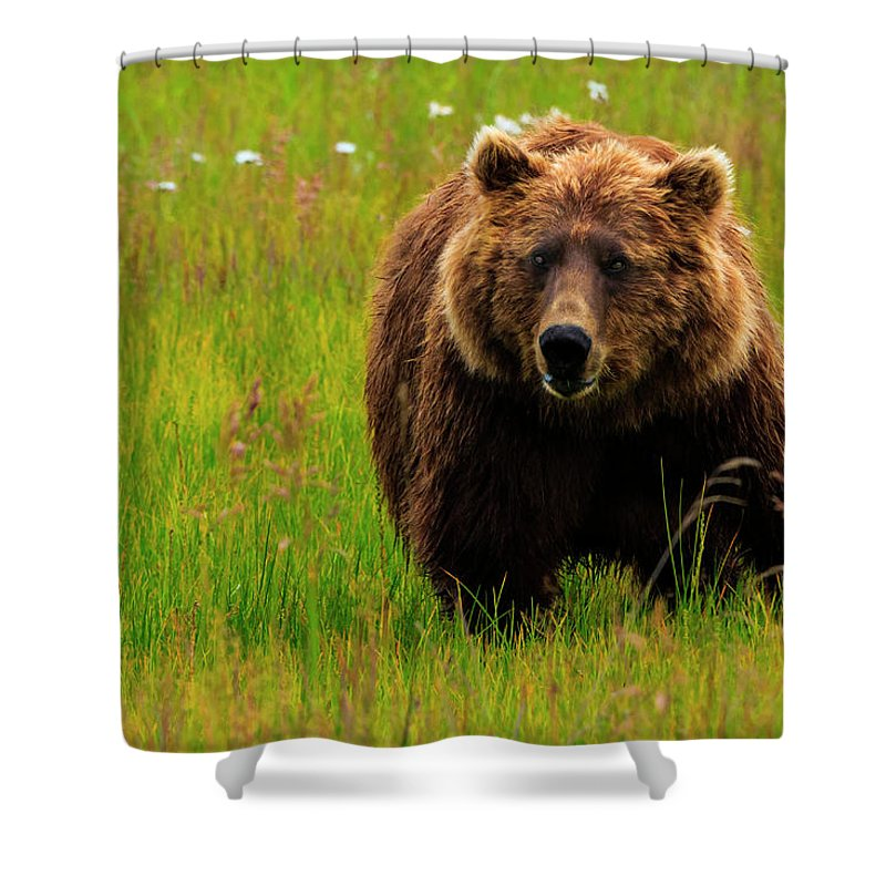 Brown Bear Shower Curtain featuring the photograph Brown Bear, Lake Clark National Park by Mint Images/ Art Wolfe