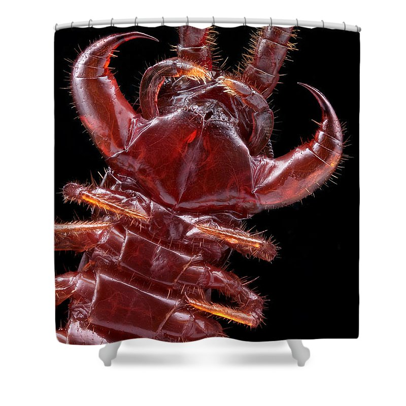 Brown Centipede Shower Curtain Featuring The Photograph Brown Centipede Jaws  By Matthias Lenke