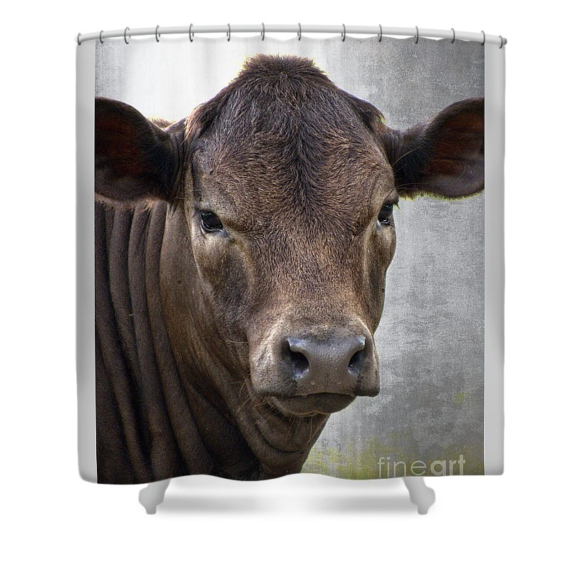 Cow Shower Curtain featuring the photograph Brown Eyed Boy - Calf Portrait by Ella Kaye Dickey