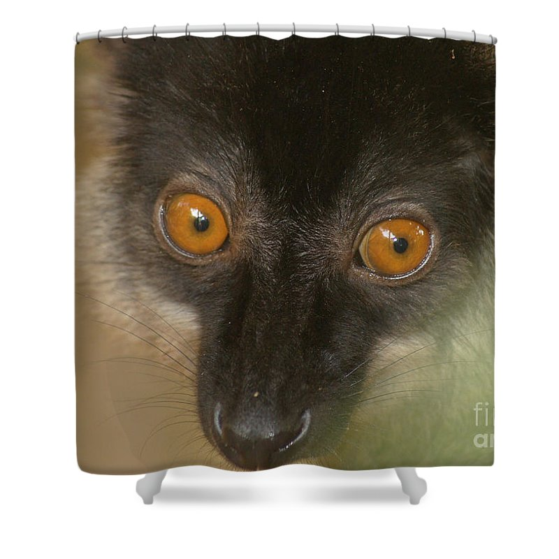 Nature Shower Curtain featuring the photograph brown maki Madagascar 4 by Rudi Prott