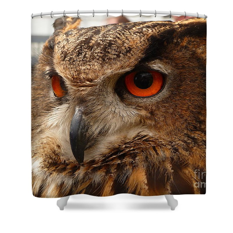 Brown Shower Curtain featuring the photograph Brown Owl by Vicki Spindler